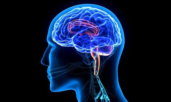 Understanding Muscle Memory Psychology